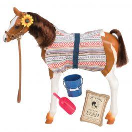 סייח פינטו – Pinto Paso Fino Foal